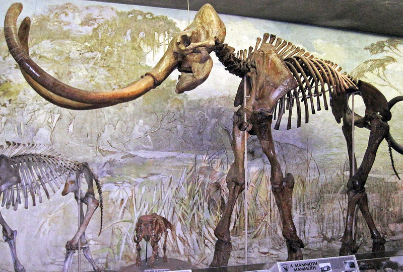A mammoth fossil.  Interesting facts about Nebraska